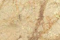A beige marble with a veined texture.